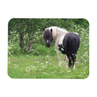 Black and White Paint Pony in Grass and Flowers Rectangular Magnets
