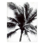 Black and White Palm Postcard