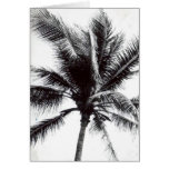 Black and White Palm Tree Card