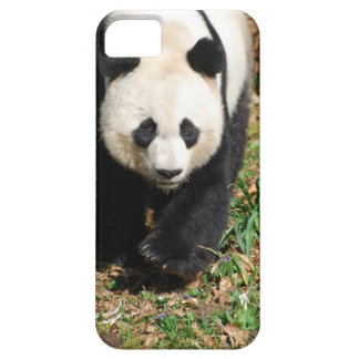 Black and White Panda iPhone 5 Covers
