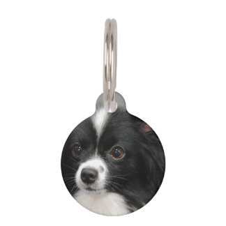 Black and White Papillon Pet ID Tag