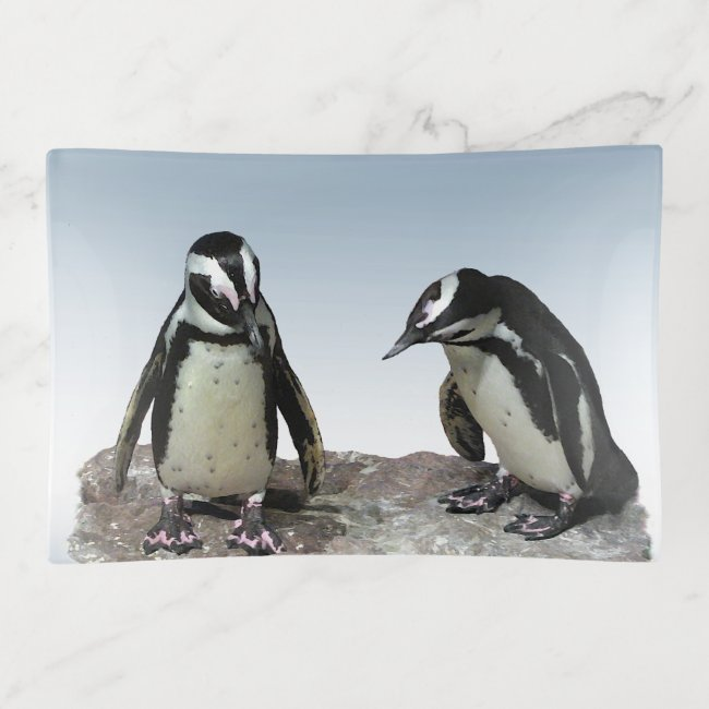 Black and White Penguin Birds Trinket Tray