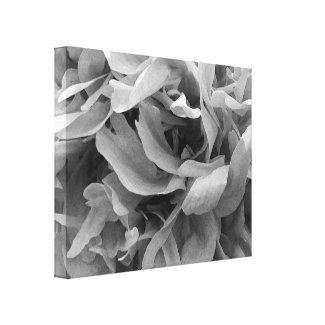 Black and White Petal Abstract Stretched Canvas Print