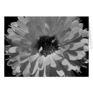 Black and White Petals Card