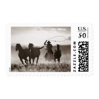 Black and White photo of a Cowboy Lassoing Horses Postage