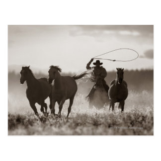 Black and White photo of a Cowboy Lassoing Horses Postcard
