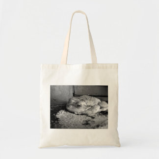 Black and white photo of a frog on a concrete sill bag