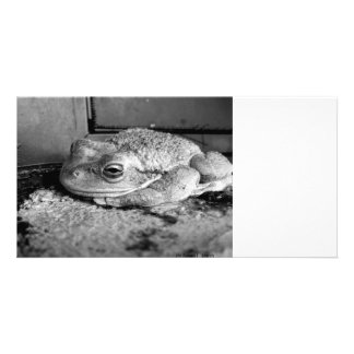 Black and white photo of a frog on a concrete sill card