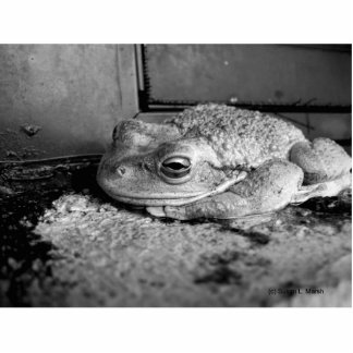 Black and white photo of a frog on a concrete sill photo cut out