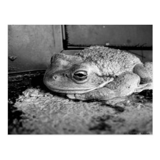 Black and white photo of a frog on a concrete sill postcard