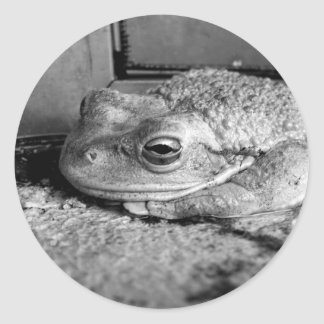 Black and white photo of a frog on a concrete sill round stickers