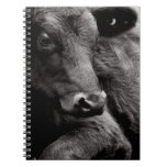 Black and White Photo of Black Angus Steer Notebook