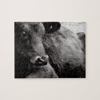 Black and White Photo of Black Angus Steer Puzzle