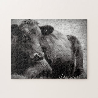 Black and White Photo of Black Angus Steer Puzzles