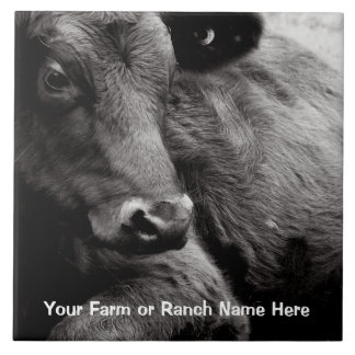 Black and White Photo of Black Angus Steer Tile