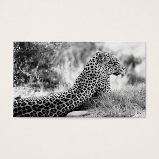 Black and White photo of Leopard looking Business Card