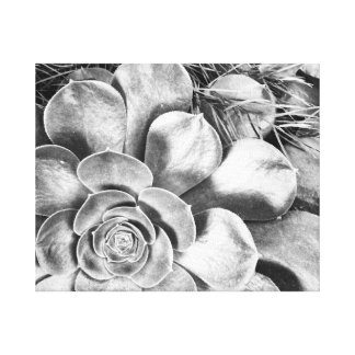 Black and white photo of succulent canvas print