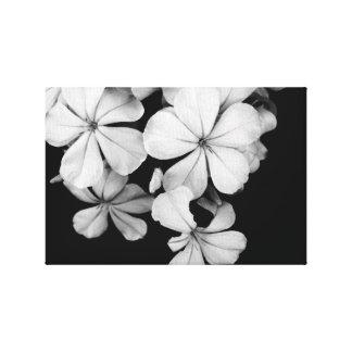 black and white Plumbago Canvas Print
