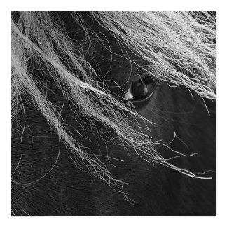 Black and White Pony Hair Poster