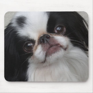 Black and white pooch mouse pad