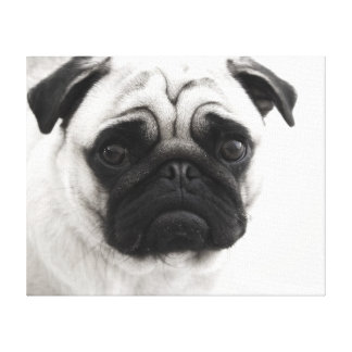 Black and White Pug Canvas Print