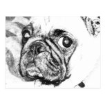 Black and White Pug Postcard