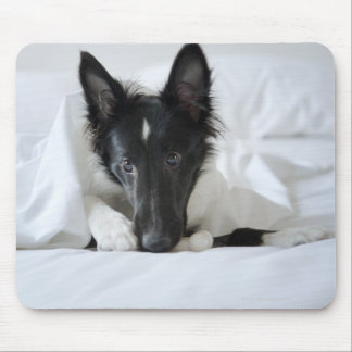 Black and white puppy in  bed with bone mouse pad