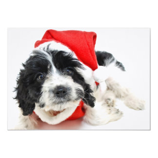 Black and white puppy wearing Santa outfit Card