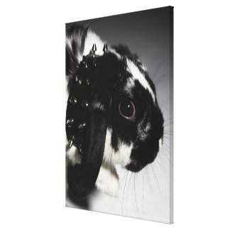 Black and white rabbit with studded collar canvas print
