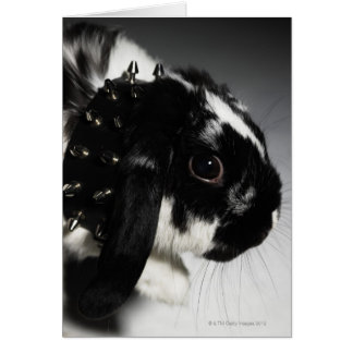 Black and white rabbit with studded collar card