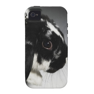 Black and white rabbit with studded collar vibe iPhone 4 cases