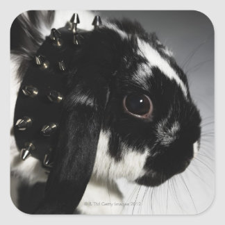 Black and white rabbit with studded collar square sticker