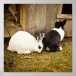 Black and White Rabbits Poster