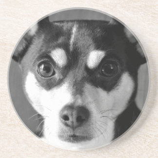 Black and White Rat Terrier Coaster