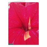 Black and White Red Tinted petunia Card