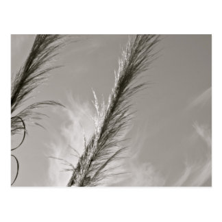 BLACK AND WHITE REEDS BLOWN IN THE WIND POSTCARD