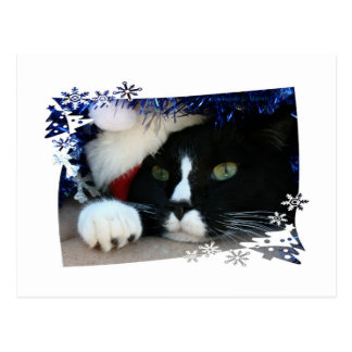 Black and White resigned cat santa hat blue tinsel Post Card