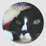 Black and White resigned cat santa hat blue tinsel Stickers