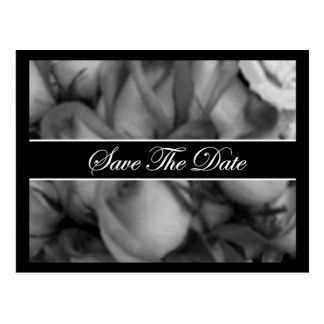 Black and White Rose Band Postcard