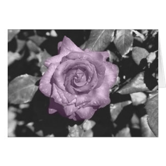 Black and White Rose Card