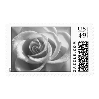 Black and White Rose - Flower Stamp