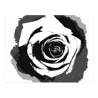 Black and white rose graphic postcard