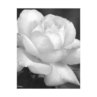 Black and White Rose in All Its Beauty Canvas Print