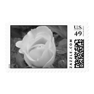 black and white rose postage stamp