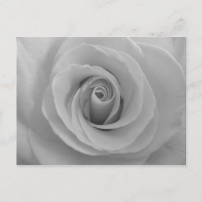 Black and White Rose Post Card by midnighteskye. Black and White Rose