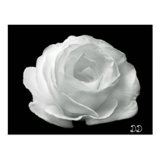 Black And White Rose Postcards