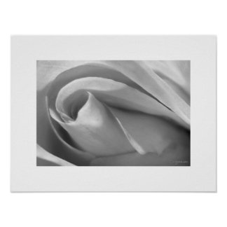 Black and White Rose Poster Poster Print Posters