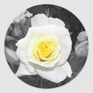 Black and White Rose with Yellow Focal Classic Round Sticker