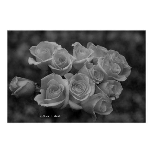 Black and white roses against spotted background poster