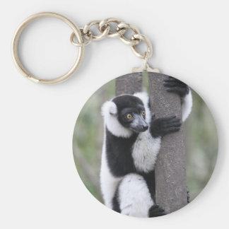 Black and White Ruffed Lemur on Tree Basic Round Button Keychain